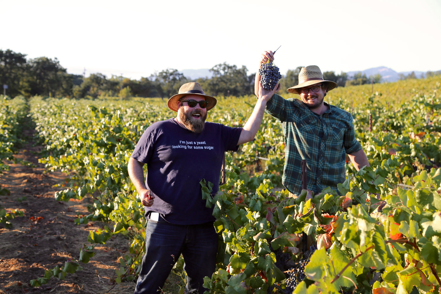 Chris Cottrell and Morgan Twain-Peterson holding Alicante Bouschet grape clusters up in Bedrock Vineyard